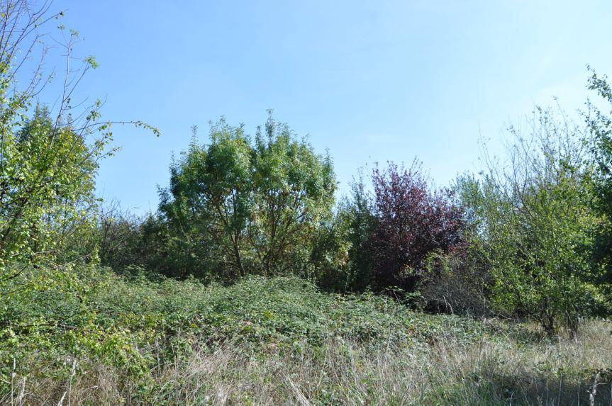 Le Jardin du Non-Agir